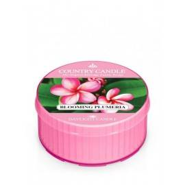 COUNTRY CANDLE ŚWIECA  BLOOMING PLUMERIA 35G